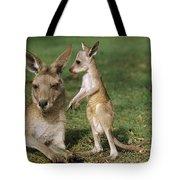 Eastern Grey Kangaroo And Joey Tote Bag