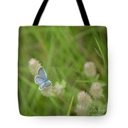 Eastern Tailed Blue Butterfly Tote Bag