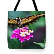 Eastern Tiger Swallowtail 7 Tote Bag