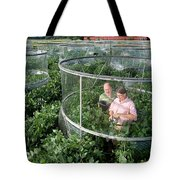 Effects Of Co2 On Soy Tote Bag
