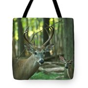 Eight Point And Fawn_9532_4367 Tote Bag