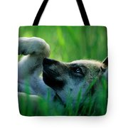 Eight-week-old Captive Gray Wolf, Canis Tote Bag
