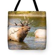 Elk Bugle Estes Lake Colorado Tote Bag