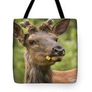 Elk Cervus Canadensis With Dandelion In Tote Bag