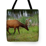 Elk Cervus Elaphus Jasper National Tote Bag