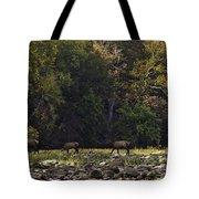 Elk Herd Crossing Buffalo National River Tote Bag