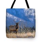 Elk In Forest, Banff National Park Tote Bag
