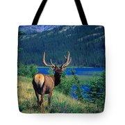 Elk In Summer By Mountain Lake Tote Bag