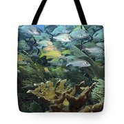 Elkhorn Coral With Schooling Grunts Tote Bag