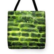 Elodea Leaf Tote Bag