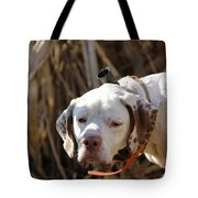 English Pointer On Point - D004001 Tote Bag