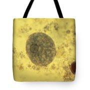 Entamoeba Histolytica Lm Tote Bag