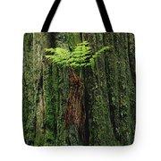 Epiphytic Fern Growing On Redwood Tote Bag