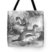 Ermines In Summer Tote Bag
