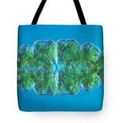 Euastrum Sp. Algae Lm Tote Bag