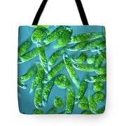Euglena Tote Bag