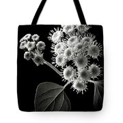 Eupatorium In Black And White Tote Bag