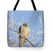 Eurasian Kestrel Falco Tinnunculus Tote Bag
