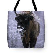European Bison Bison Bonasus In Snow Tote Bag