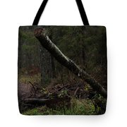 Evening In A Pine Forest Tote Bag