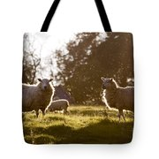 Evening On The Meadow Tote Bag
