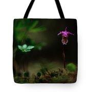 Fairy Slipper Orchid Calypso Bulbosa Tote Bag