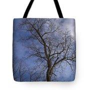 Fairy Tale Tree Tote Bag
