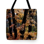 Fall Beckons  Tote Bag