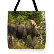 Fall Bull Moose Tote Bag