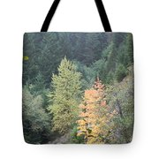 Fall Color In The Trees Tote Bag