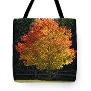 Fall Colored Tree Tote Bag