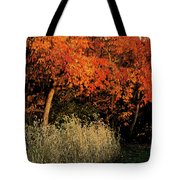 Fall Colors 2 Tote Bag