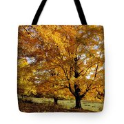 Fall Colours In Eastern Townships Tote Bag