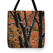 Fall Foliage Of Maple Trees After An Tote Bag