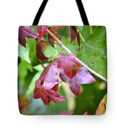 Fall Has Begun Tote Bag
