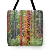 Fall Ivy On The Trees Tote Bag