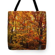 Fall Leaves On Trees Tote Bag
