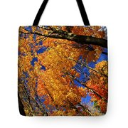 Fall Maple Treetops Tote Bag by Elena Elisseeva