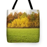 Fall Poplars Tote Bag