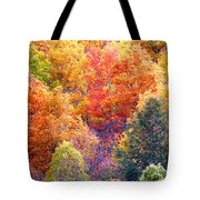 Fall Trees 3 Tote Bag