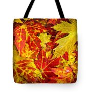 Fallen Autumn Maple Leaves  Tote Bag