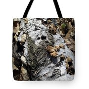 Fallen Birch Tote Bag