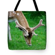 Fallow Deers Lunchtime Tote Bag by Isabella F Abbie Shores FRSA