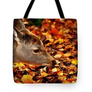 Fawn In Autumn Tote Bag