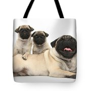 Fawn Pugs, Mother And Pups Tote Bag