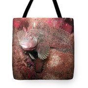 Feather Blenny Female Tote Bag