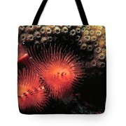 Feather Duster Feeding 4 Tote Bag