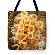 Featherduster Tote Bag