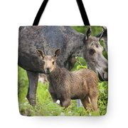 Female And A Three Weeks Old Moose Tote Bag