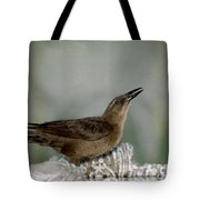 Female Boat Tailed Grackle Tote Bag